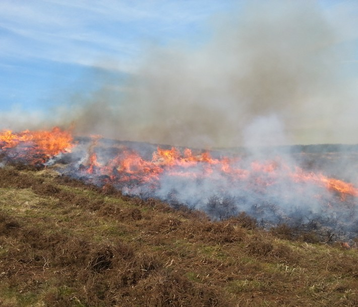 Heather burning April 2015